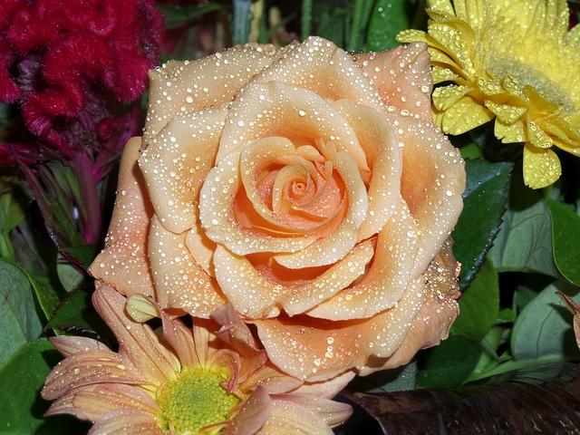 blog pix rain on roses latest one