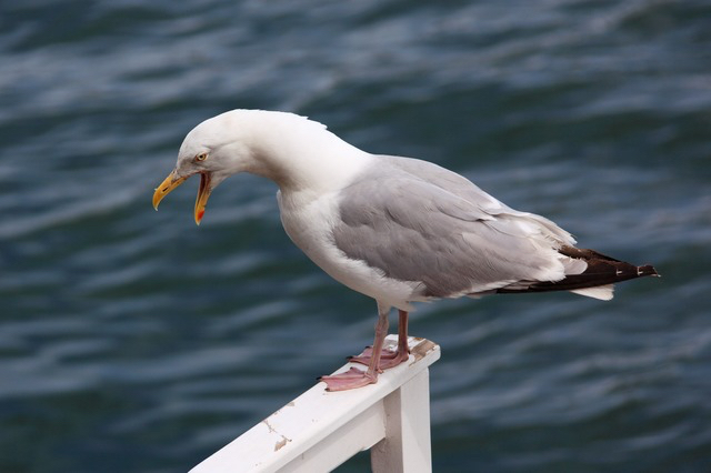 blog pix angry bird